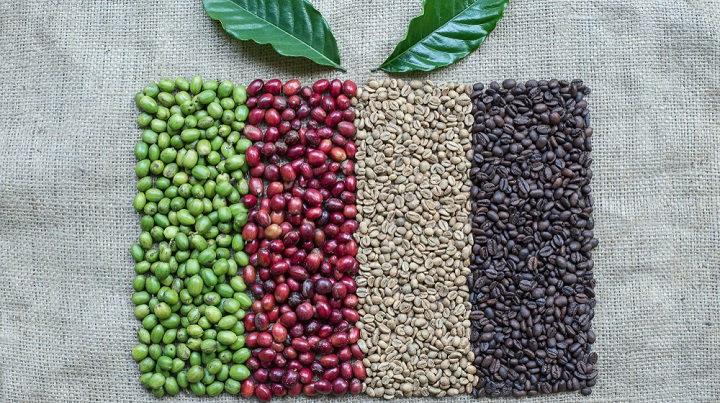 Image of Coffee Berries and Coffee Beans for enema